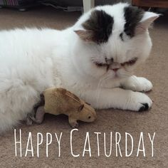 Happy #Caturday  #weekend #t Lou Instagram, Cats, Happy, Animals, Gatos, Animales, Animaux, Ser Feliz, Animal