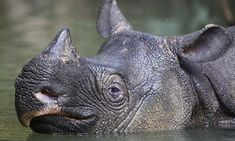 See the first high-definition pictures of the elusive Javan rhino - These could be the best photos of one of the world's rarest mammals.