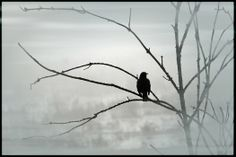 """""""Morning Song"""" was photographed on Spencer Island near Everett, WA on a chilly, foggy morning."""