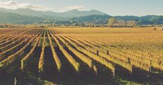 Sauvignon Blanc from New Zealand is divisive. But the country's diverse soils produce other varieties, including Pinot Noir, Syrah, and Chardonnay.