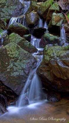 The Buderim Rainforest and Waterfall Walk, discover the hidden treasure here in the Buderim Forest