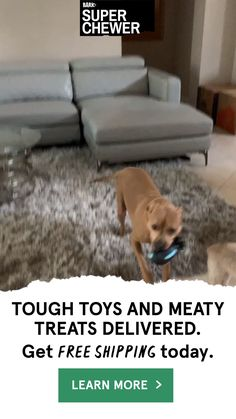 gifts for pet owners Tough Dog Toys, Best Dog Toys, Cute Dogs And Puppies, Pet Dogs, Pets, Doggies, Happy Animals, Cute Baby Animals, Pet Corner