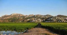Cosecha 2013 #arrozbomba: cuenta atrás 15-20 días para el inicio de la siega de arroz bomba de #PegoNatura