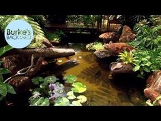 Temple Gardens with Koi Ponds, Water Features & Bonsai pool water features Burke's Backyard, Water Garden In The Tropics Bonsai, Water Sculpture, Temple Gardens, Pool Water Features, Backyard Water Feature, Soil Improvement, Garden Makeover, Ornamental Plants, Organic Vegetables