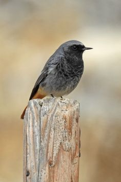 Home - Andalucia Bird Society Bird Guides, Information About Birds, Andalucia, Months In A Year, Bird Watching, Numbers, Big, Winter, Black