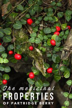The Medicine, Botany