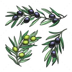 Vector Illustration of Olive Branches. by Nata-Alhontess Hand drawn vector illustration of olive branches. Isolated on white background. Olive Tattoo, Olive Branch Tattoo, Branch Drawing, Clip Art Pictures, Pattern Drawing, Watercolor Paintings, Art Drawings, Art Projects, How To Draw Hands