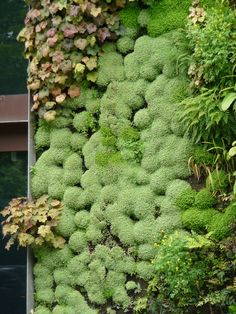 Succulent Vertical Garden by Patrick Blanc at Quai Branly Museum