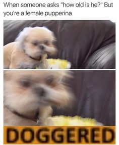 I must bork about this