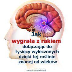 zdrowie.hotto.pl - Jak wygrała z rakiem dołączając do tysięcy wyleczonych dzięki tej roślinie znanej od wieków