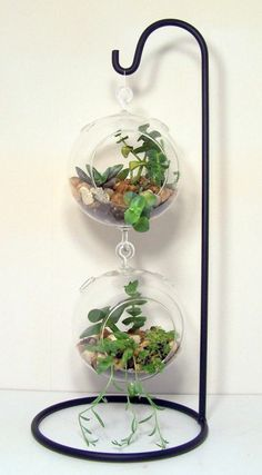 Ideas Succulent Terrarium Diy Glasses Center Pieces For 2019 Terrarium Stand, Hanging Glass Terrarium, Garden Terrarium, Succulent Terrarium, Succulent Display, Terrarium Wedding, Terraria, Hanging Succulents, Cacti And Succulents