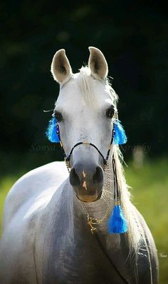Drinkers of the Wind - Arabian horse - photo by Sonya Weaver