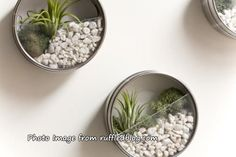 Is this an air plant? This will make a great small gift.