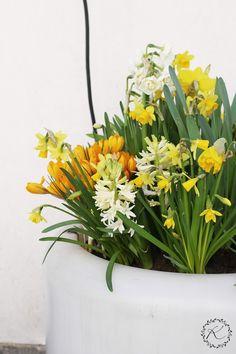 KUKKALA #kevätkukat #springflowers