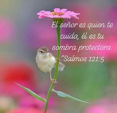Bible Verses About Faith, Biblical Verses, Bible Scriptures, Spanish Inspirational Quotes, Latin Quotes, God Loves You, Jesus Loves, Holly Bible, Bible Guide