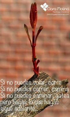 SIGUE ADELANTE... (((Sesiones y Cursos Online www.psicologaemocional.com #psicologia #emociones #salud)))