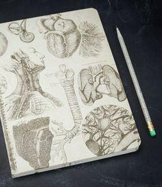 Anatomy Hardcover Large Journal