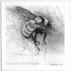 April Coppini charcoal drawings  https://clothandgoods.com/items.php?CID=12