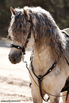 And this horse has the beachy waves you've only previously seen in your dreams. | 20 Horses With Better Hair Than You