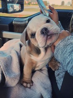 Do not give up and ask yourself again do you need dogs and puppies tips? Check the link to our site to read more. Cute Baby Dogs, Cute Dogs And Puppies, Bulldog Puppies, Doggies, Puppies Tips, Boxer Pup, Funny Puppies, Adorable Dogs, Baby Animals Pictures