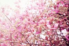 Flowering branches by Ana Pontes.
