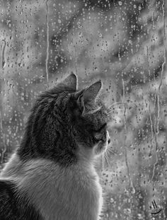 I love cats looking out on the rainy day Crazy Cat Lady, Crazy Cats, Animals And Pets, Cute Animals, I Love Rain, Rain Photography, Rainy Day Photography, Color Photography, White Photography