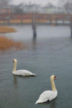 Swanson a marsh wif foggy mist n bridge in background on Midford Beach in Midford Connecticut_ USA