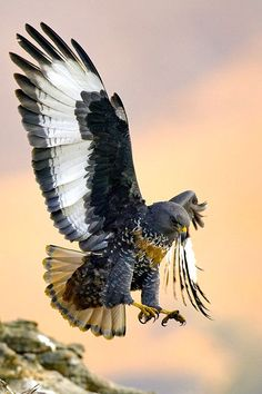 Birds of Prey. Kinds Of Birds, All Birds, Birds Of Prey, Pretty Birds, Beautiful Birds, Animals Beautiful, Exotic Birds, Colorful Birds, Photo Aigle