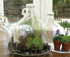 Big jar terrarium...like the idea of cutting the bottom off of the jar to create a terrarium.