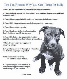 top 10 reasons why you can't trust a pit bull