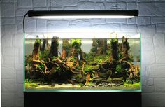 Reborn par GautieRC #aquascaping #aquarium