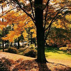 WEBSTA @ patrycjasmolik - Piękna złota jesień... uwielbiam jesień za te wszystkie ciepłe kolory, gdy liście mienia się w słońcu, za złoty deszcz liści przy każdym powiewie wiatru, za przepiękne drogi ozdobione jesiennymi drzewami.. cudownie! #autumn #fall #jesien #bearmountainstatepark #park #colors #photography #goldtree