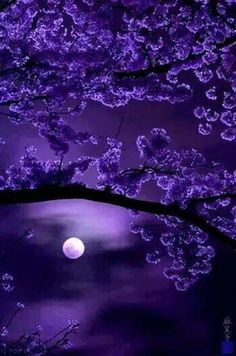The very best of Rabbit Carrier's pins - Purple Flowers with Moon ❤