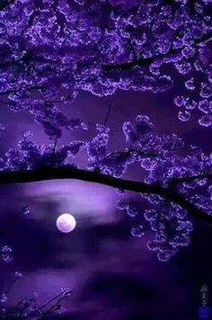 Purple, moon