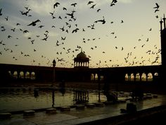 Birds over a reflecting pool, india