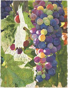 Life in Full Color - Watercolors by Cara Brown - Summer Zinfandel