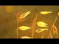 Relaxing Instrumental Music: soft, studying, work, think music - relaxdaily N°074 - YouTube