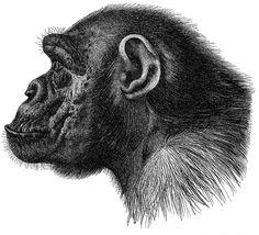 ape_profile.jpg (651×593)