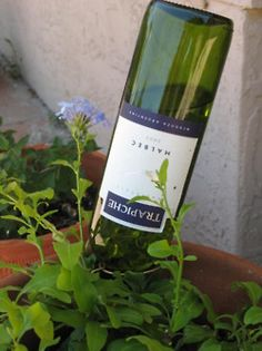 Another good way to recycle a wine bottle. Use a water filled wine bottle to water plants slowly.I feel like this would just make it look like I finished a bottle of wine while wandering around outside, then just left it in the garden. Empty Wine Bottles, Glass Bottles, Beer Bottles, Recycle Bottles, Soda Bottles, Juice Bottles, Glass Marbles, Water Plants, Garden Plants
