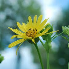 Top 25 most beautiful yellow flowers yellow flowers dahlia and yellow flowers have the potential to bring joy to pretty much anyone here are some of the most coveted yellow flowers read to know the symbolism and mightylinksfo