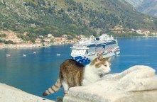 La mia crociera inaugurale a bordo di Majestic Princess Princess Cruises