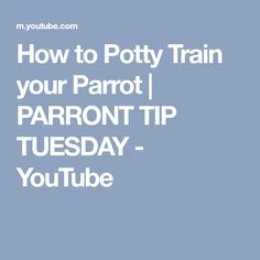 How to Potty Train your Parrot | PARRONT TIP TUESDAY - YouTube