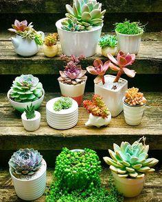 Pure, simple, white ⚪️ . . #succulents #pure #joy #succulentlife #restorative ##breathe #mygarden #myhappyplace #chooseday #tuesday #chooselove #suculentas #nature #mypassion #calm #plants #squad #photoshoot #bekind #succulentlove