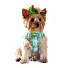 American River Ultra Choke Free Dog Harness in Green Turqouise Plaid Size XLARGE Chest 2124 for pets weighing 2040Lbs ** Click image to review more details.(This is an Amazon affiliate link and I receive a commission for the sales)