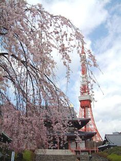 with Tokyo tower at Zoujou-ji Temple