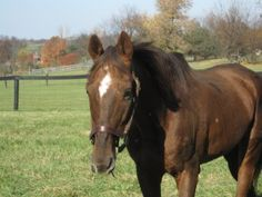Verifiable, 27 year old Stallion by Secretariat, joins The Exceller Fund.  He is currently being fostered, but some of his expenses remain the responsibility of TEF.  Donations are being taken through the Golden Years Fund to assist him and other geriatric Thoroughbreds.  www.excellerfund.org/goldenyears.html