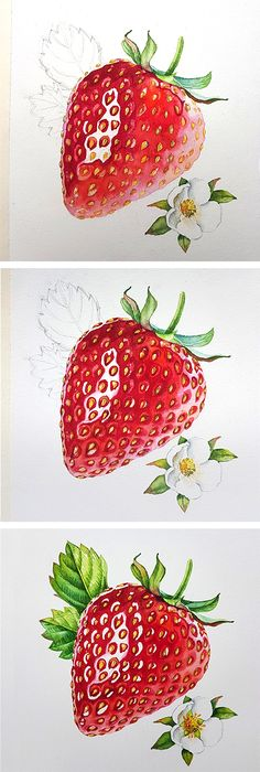 Watercolor step by step tutorial on how to paint Strawberrry - detailed commercial illustration by Kateryna Savchenko. First make your sketch, then apply masking fluid to the reflection areas, and start painting! Remove your masking liquid at the end.