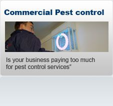 Commercial Pest Control   For rapid, reliable, cost effective and commercial pest control service, you should hire The Pied Piper. Learn more about our Professional, Commercial Pest Control Services at Thepiedpiper.uk.com.