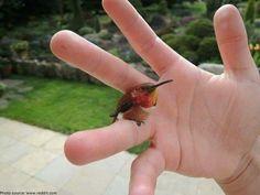 Kolibri auf Kinderhand