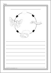 Silkworm life cycle colour and write worksheets (SB10986) - SparkleBox